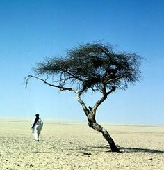 Arbre du Ténéré, Niger.  Once the most isolated tree on earth. Knocked over in 1973.