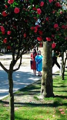 As Marías no Parque da Alameda. Santiago de Compostela. Walking Tour, Tour Guide, Day Trips, Sidewalk, Villa, Tours, Amazing, Plants, Pink