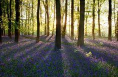 27 Beautiful Country Walks Near London UK   1 Hour Away