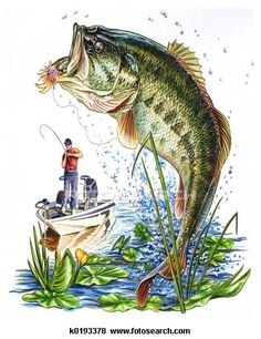 Stock Illustration of Bass - Fishing - Search EPS Clip . Bass Fishing Pictures, Fishing Videos, Fish Drawings, Largemouth Bass, Medical Illustration, Fish Art, Free Illustrations, Fly Fishing, Saltwater Fishing
