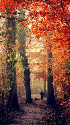 Autumn walk.. Vosbergen - Eelde, Netherlands | Flickr - Photo by frata60