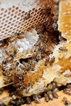 Busy Bees. #Bienen www.apidaecandles.de