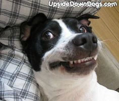 """Burly The Mixed Breed : """"Just smile, it makes 'em wonder what you're up to..."""""""