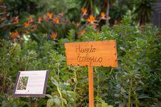 Huerto ecológico de Fuerte Marbella