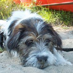 heididahlsveen:  #atsjoo og sand #dog #puppy #valp #hund