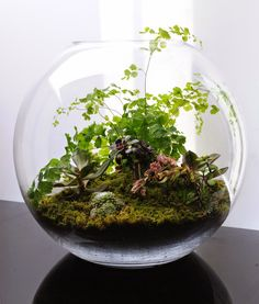 046+BEAUTIFUL+TERRARIUMS+SMALL+AND+TINY+GARDENS+YOU+CAN+GROW+ON+TABLE+TOPS.jpg 968×1,137 pixels