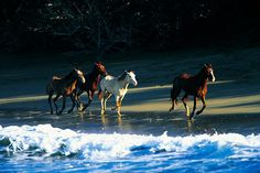 In the #Dominican Republic, even horses love a beach day. (photo by Anthony Ghiglia via redbubble.com)