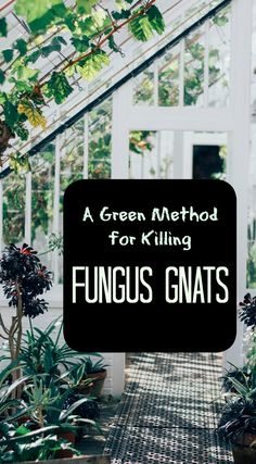 Kill fungus gnats in potted plants and interiorscapes with NO CHEMICALS. All natural pest control alternative!