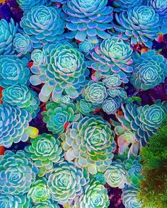 Fractals in nature   #succulents #succulove #seasons #nature #soul #blue #art #happy #smile #picoftheday #instagram #instadaily #instagood #good #life #love #colorful #beautiful #health #healthychoices #healthy #fit #fitness #fitnessjourney #motivation #inspiration by the.imaginist