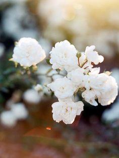 Romantic Butter & Citrus Wedding Inspiration in Colorado | Little White Dress Bridal Shop: Denver and Colorado's Best Bridal Gowns & Wedding Accessories