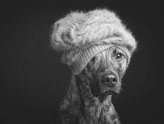 Los retratos caninos de Elke Vogelsang | OLDSKULL.NET