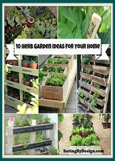Everything Plants and Flowers: 10 Herb Garden Ideas For Your Home - Find an Herb ...