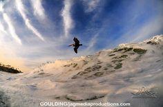 Aaron Goulding Photography 1973 Prospect st. La Jolla Ca 92037 Surfing Pelican AAron Goulding Photography #animallovers