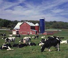 When I was growing up.... Dad milked cows and we had two of those blue silos, barely remember when they were put up.