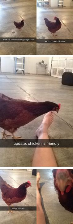 There is a chicken in my garage., is soo stupid but I laugh soo hard xD