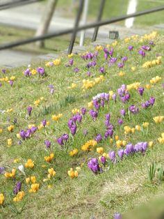 Small flowers spread joy