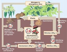 Diagram showing the 3 different ways of nitrogen fixation synbio diagram showing the 3 different ways of nitrogen fixation synbiodesign pinterest ccuart Image collections