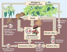 Nitrogen Cycle.