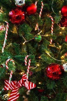 christmas trees | Christmas Tree Detail by Petr Kratochvil