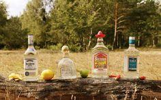 Guter Tequila: 4 beliebte Agavenbrände von 12 bis 40 Euro im Test