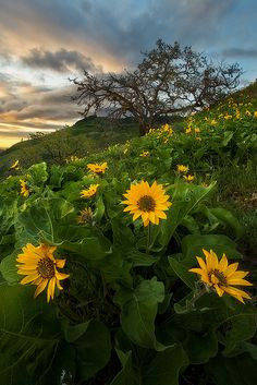Flower Power by D Breezy - davidthompsonphotography.com, via Flickr