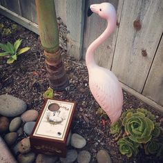 Everyone loves cigar box speakers, especially flamingos and garden gnomes. Pick yours out in our @Etsy store. #Flamingo not included.