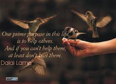 """""""Our prime purpose in this life is to help others. And if you can't help them, at least don't hurt them."""" - Dalai Lama Human Rights Quotes, Dalai Lama, Helping Others, Art Quotes, Insight, It Hurts, Purpose, Thoughts, Life"""