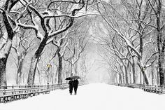 "Photographed during a late Winter storm in an area of Central Park known as ""The Mall""."