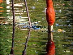 Flamingo Art 3 Bilder: Poster von Max Steinwald bei Posterlounge.de