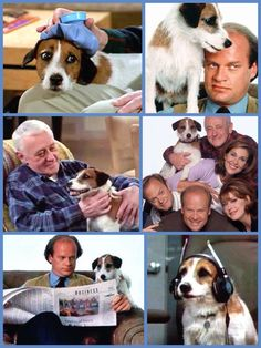 Frasier (1993-2004) - Eddie, the dog on Frasier. His real name was Moose, a veteran canine actor. He was a Jack Russell Terrier.