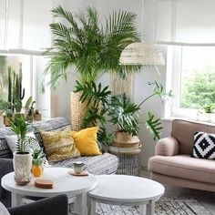"""Tropicool! Palms, 🍍, wicker baskets, Philodendron and patterns... tropicool vibes in Regina's home!…"""