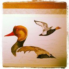 Terminando acuarela de un Pato colarado #nettarufina #xibec #watercolor #акварель - @pacotorresill- #webstagram