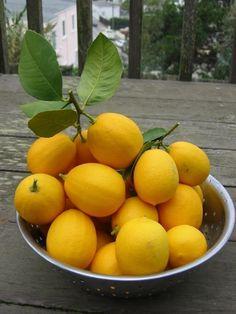 #lemon #yellow #fresh #fruit
