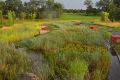 NC Museum of Art Pond Project - storm water runoff into bioretention terraces and wetland