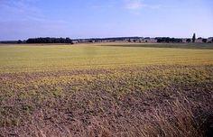Herbizid – Wikipedia