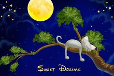 Good Night! •*`°*•★