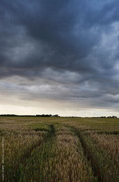 Stock photo of Storm clouds over a field of wheat at sunset. Victoria Erickson, Blue Rain, Inspiring Photography, Storm Clouds, Great Pictures, Landscape Photos, Norfolk, Sketching, Beautiful Things