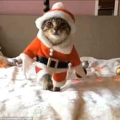 Feline festive! Adorable videos show tabby cats dressing up as Santa Claus, pirates and policemen | Daily Mail Online