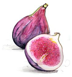 Nice watercolor painting of figs - by Tracy Hetzel - Long Blue Straw L'art Du Fruit, Fruit Art, Fig Fruit, Art And Illustration, Watercolor Illustration, Illustrations, Illustration Techniques, Watercolor Fruit, Fruit Painting