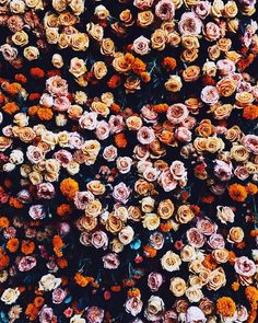 Little Flowers, Beautiful Flowers, Flowers Nature, Wild Flowers, Plants Are Friends, Flower Market, Autumn Inspiration, Pretty Pictures, Red Roses