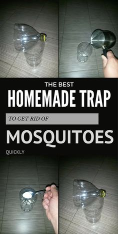 The Best Homemade Trap to Get Rid of Mosquitoes Quickly