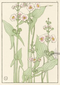 Jeannie Foord «Decorative Plant and Flower Studies: For the Use of Artists, Designers, Students and Others Botanical Drawings, Botanical Illustration, Illustration Art, Art Nouveau Pattern, Art Nouveau Design, Botanical Flowers, Botanical Prints, Plant Drawing, Realistic Drawings