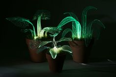 "According to artist Marina DeFrates: ""I made these evergreen glowing plants. The Botany world has always amazed me as an Industrial designer, each plant has its own unique aesthetics, these aesthetics serve a specific need or function. In making the Lamp Plant I decided to focus on the various types"