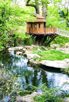 Amazing Tree House Ideas You Need To See Unusual Homes_ Britain's Blue Forest builds gorgeous treeho Better Homes And Gardens, Modern Tree House, Cool Tree Houses, Tiny Houses, Tree House Designs, Unusual Homes, Small Trees, Green Building, Building Homes