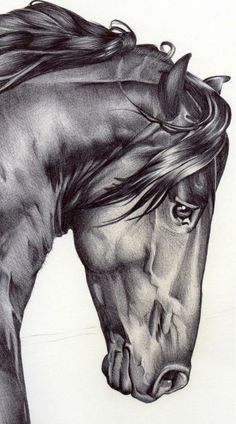 Adore this ink drawing. Love the idea of decorating a nursery with simple original illustrations. Horse Drawings, Animal Drawings, Art Drawings, Pencil Drawings, Charcoal Drawings, Drawing Animals, Portraits From Photos, Horse Art, Horse Head