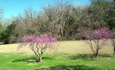 Early spring- Ha Ha Tonka Springs, Lake of the Ozarks Missouri