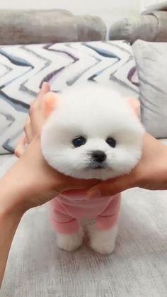 Very cute dog Very Cute Puppies, Cute Animals Puppies, Baby Animals Super Cute, Cute Baby Dogs, Cute Funny Dogs, Cute Stuffed Animals, Cute Little Animals, Cute Funny Animals, Baby Cats