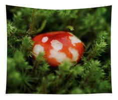 Fungi Tapestry featuring the photograph Magic In The Undergrowth by Helen Kelly Wall Tapestries, Tapestry, Wall Spaces, Fungi, Fine Art America, Christmas Bulbs, Photograph, The Incredibles, Magic