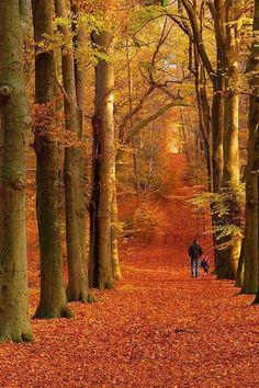 walk among the leaves