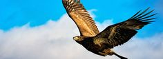 Filename: eagle free screensaver wallpapers Resolution: File size: 1852 kB Uploaded: Baines London Date: Seo Agency, Digital Magazine, Seo Company, Cool Wallpaper, Bald Eagle, Digital Marketing, Web Design, Screensaver